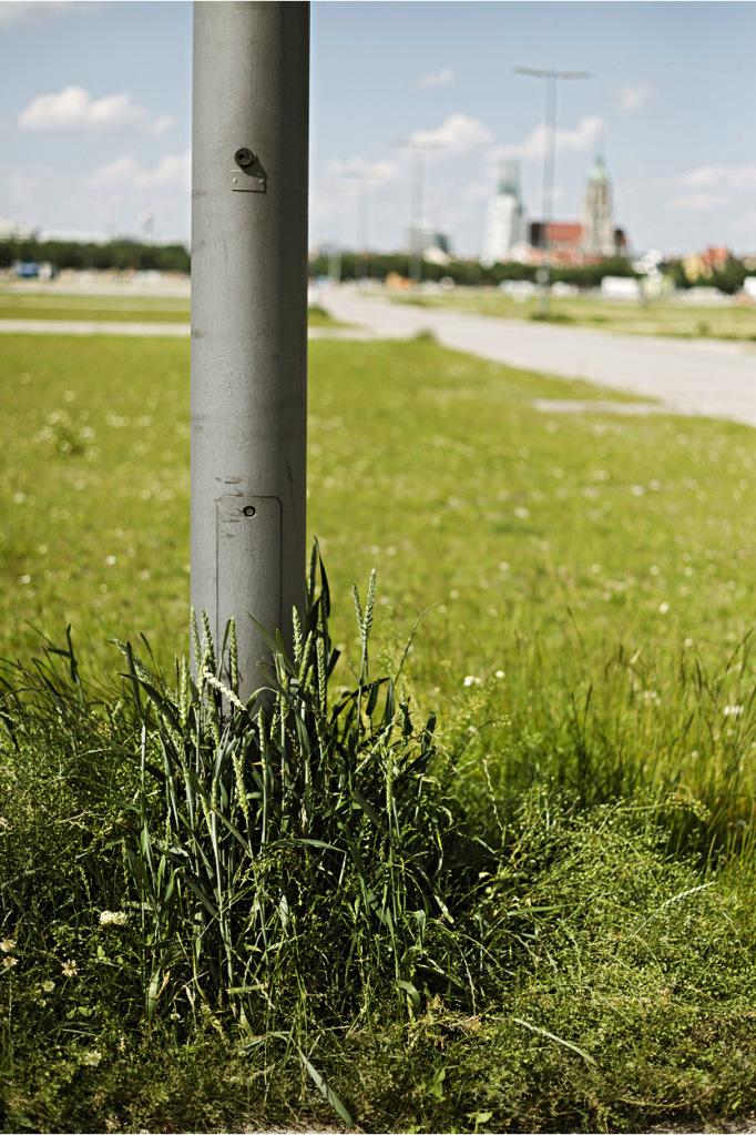 An einem Laternenmast wachsen besonders viele Grünpflanzen.