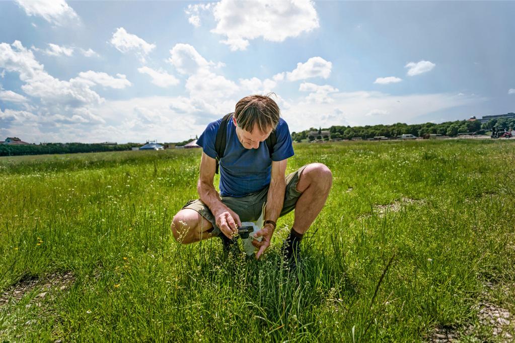 Botaniker Jürgen Feder kniet auf einem Grünflächen-Abschnitt der Theresienwiese nieder und begutachtet die Pflanzen.